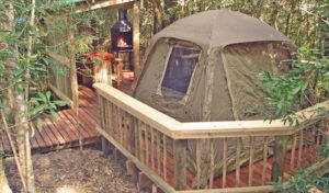 forest timber camping decks