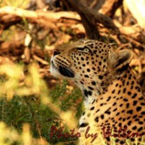 Photos from the Kalahari