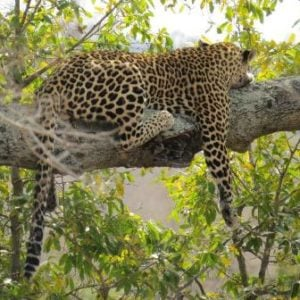 Photos from the Kruger National Park