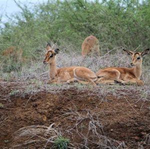 Roelof Mare - Kruger National Park